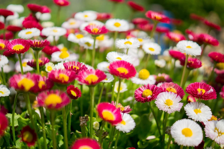 EPoS For Garden Centres - Flowers